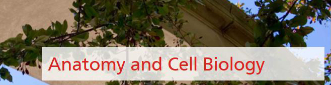 Anatomy and Cell Biology