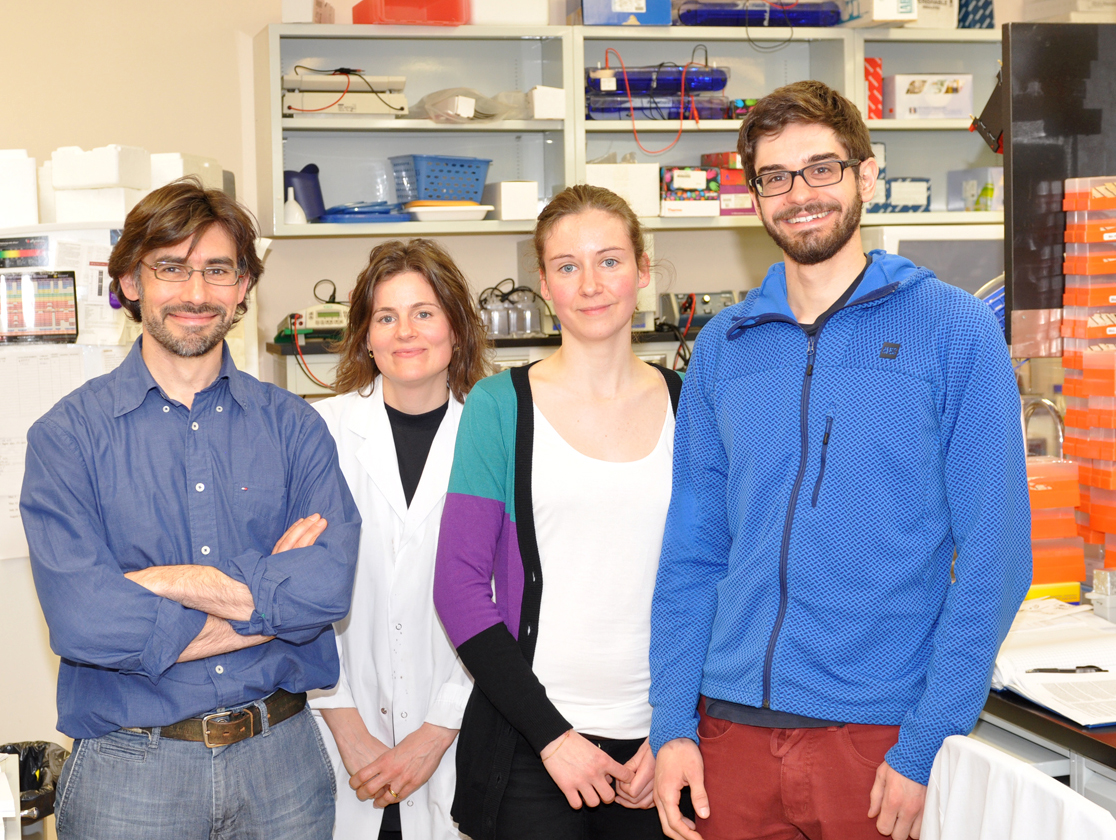 Left to right: Javier M. Di Noia, Astrid Zahn, Ludivine Litzler, Stephen P. Methot