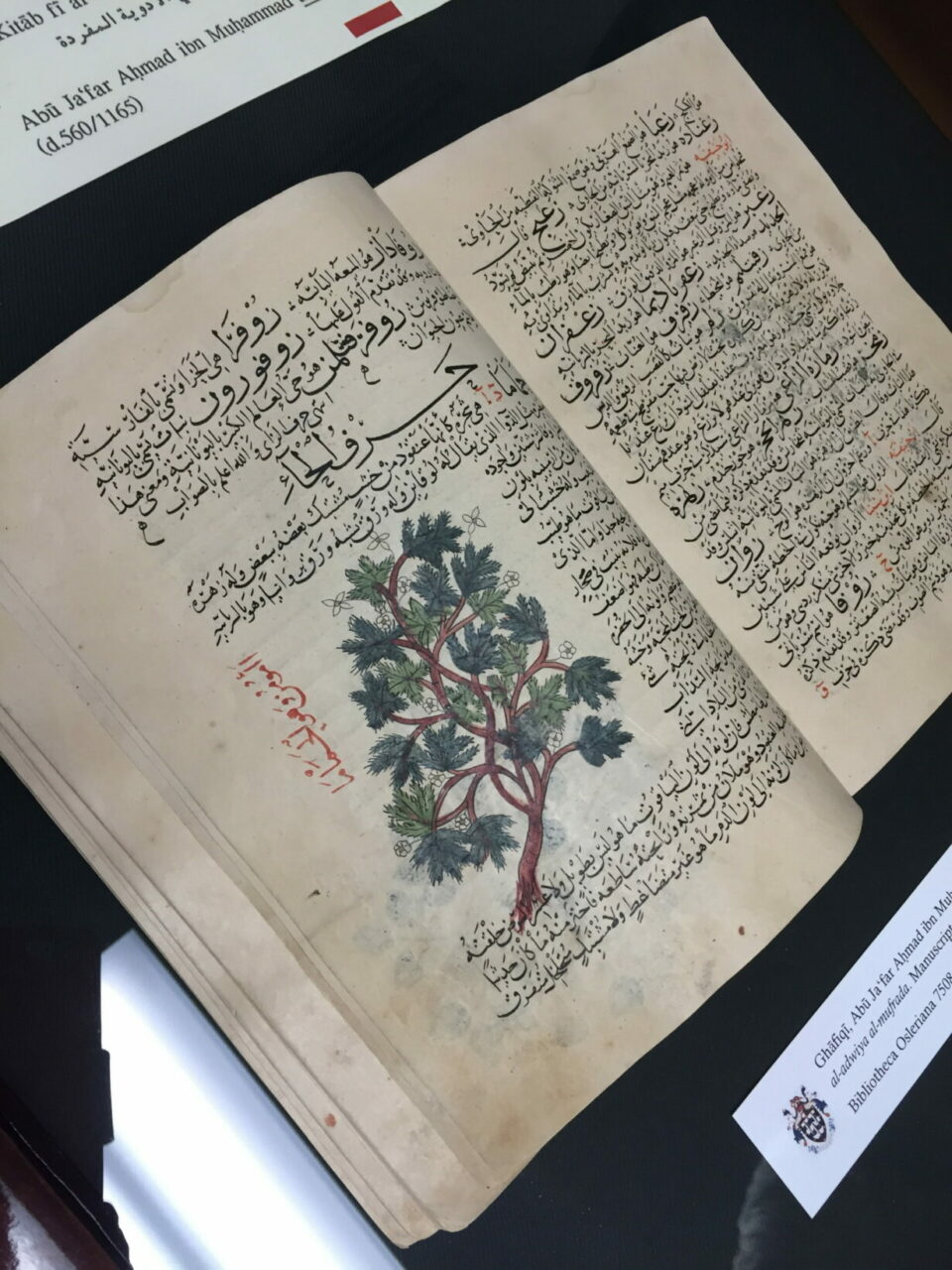 """""""The far-sighted donors of the Class of 1961 have made the reification of our misty-eyed dreams a reality. The Herbal of al-Ghāfiqī is a stunning work that asks more questions than it answers. It adds to the history of humanity."""" – Professor J. Jamil Ragep, Director, Institute of Islamic Studies, McGill University."""