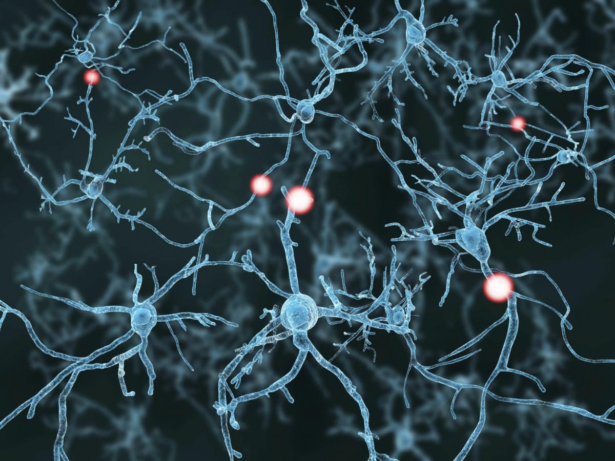 neurons3_63224_0